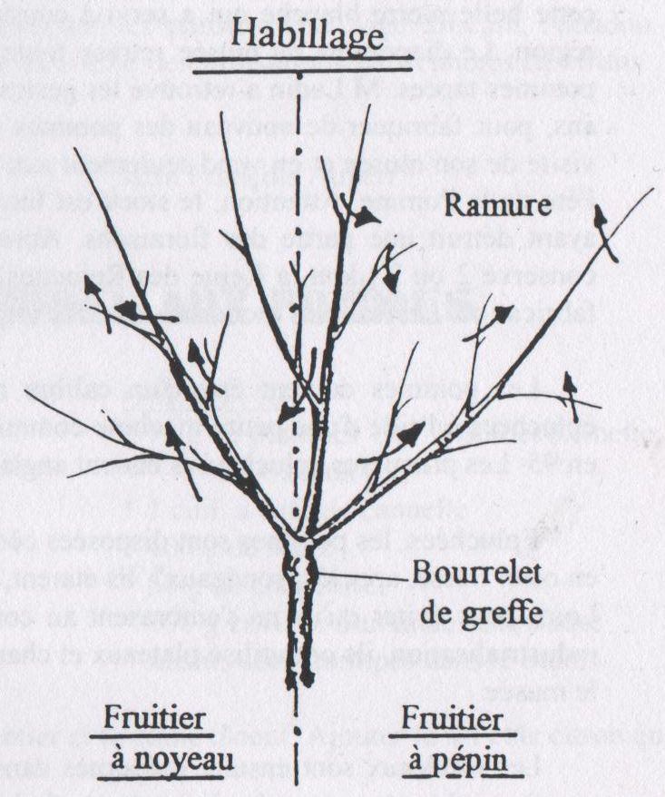 quelques conseils pour vos plantations association les mordus de la pomme. Black Bedroom Furniture Sets. Home Design Ideas
