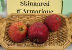 Skinnared d'Armorique